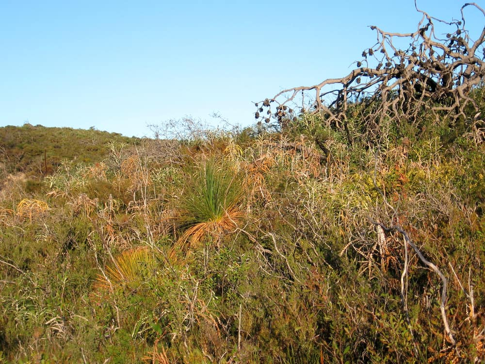 Visual of the impact of a dieback front