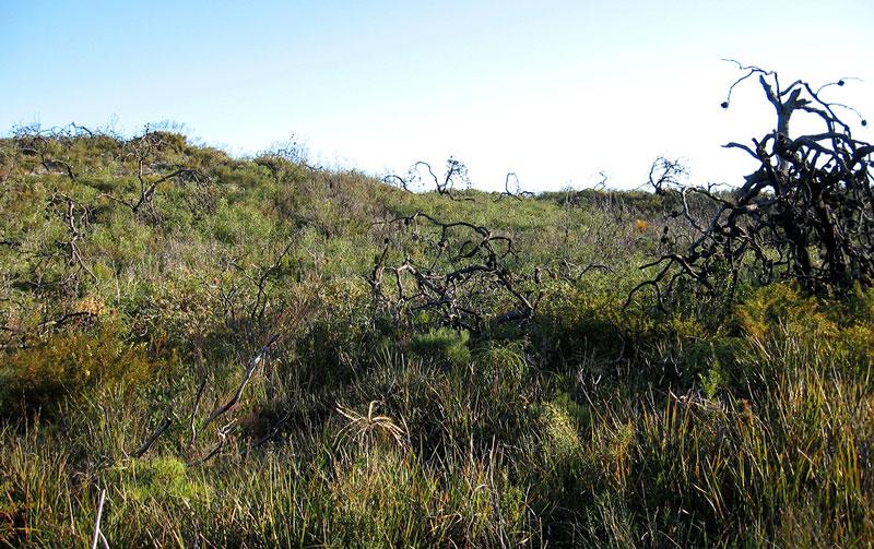 Effects of dieback on bushland
